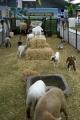 Animal Farms